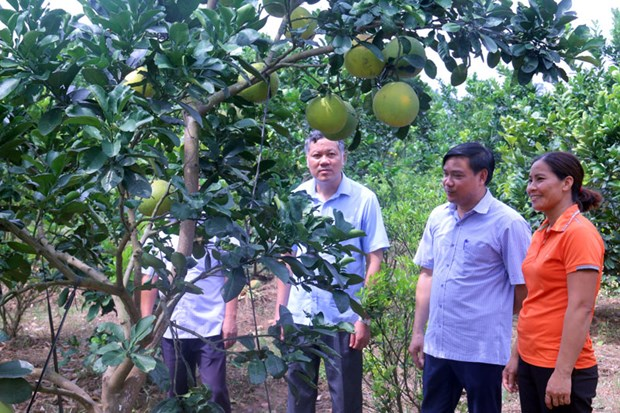 Farm-based economy contributes to new rural area building in Bac Ninh hinh anh 1