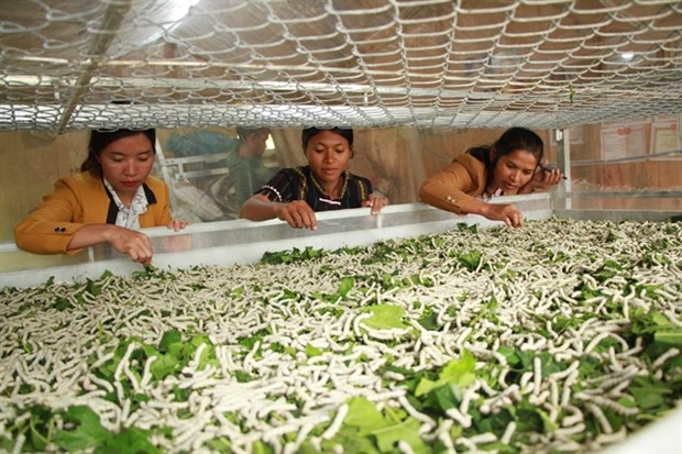 Lam Dong sericulture farmers find livelihoods steady hinh anh 1