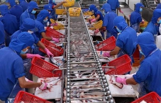 Vietnam's tra fish exports to reach 2.3 billion USD in 2019 hinh anh 1