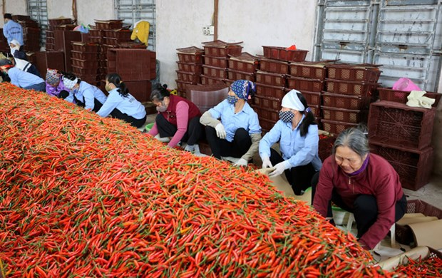 Stronger links between firms, farmers bolster agriculture in Bac Ninh hinh anh 1