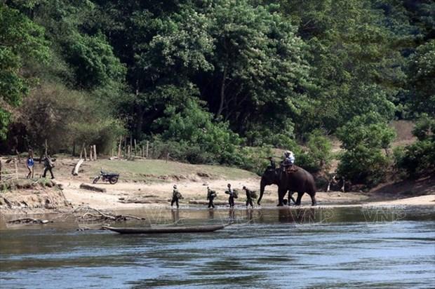 WWF helps Vietnam combat wildlife trafficking hinh anh 1