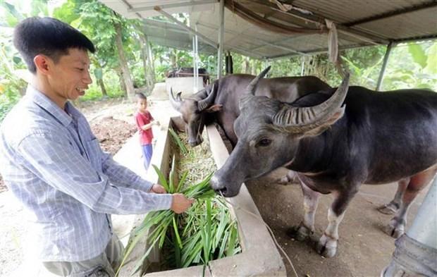 Vietnam seeks to develop modern livestock industry hinh anh 1