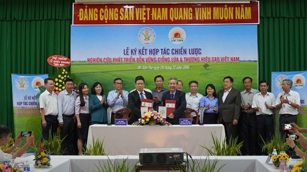 Company, research institute to develop new rice varieties hinh anh 1