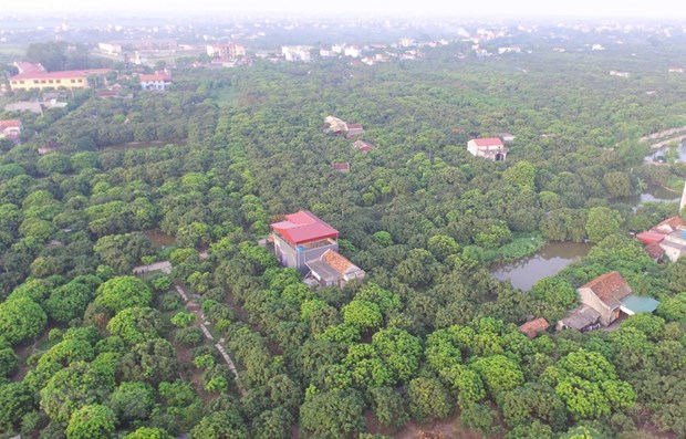 Investment in farm land needed: experts hinh anh 1