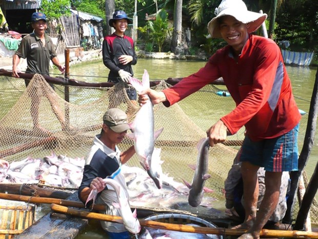 Fisheries sector to focus on standardising production for higher value hinh anh 1