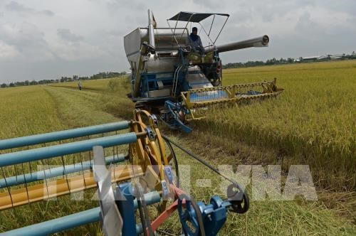Cambodia's rice export to China up 46 percent in 2019 hinh anh 1
