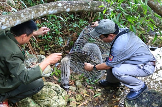 Wild animals released in Son Tra reserve hinh anh 1