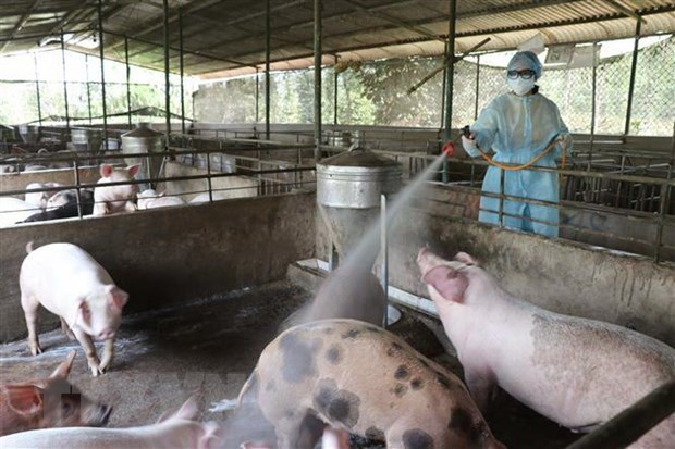 Vietnam, France partner in producing vaccines against livestock diseases hinh anh 1