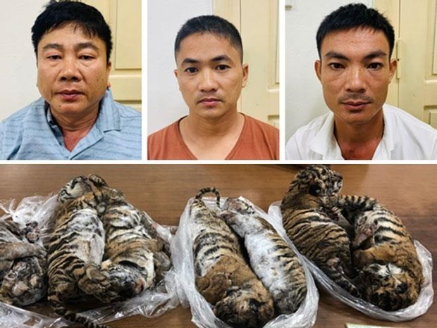 Man receives six-year jail term for transnational wildlife trading hinh anh 1