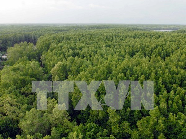 VN's national forest stewardship standard effective from May hinh anh 1