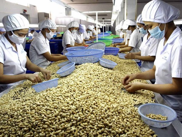 Efforts to maintain Vietnam's leading position in cashew export hinh anh 1