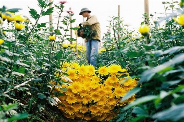 Fresh air among the flowers outside Hanoi hinh anh 1