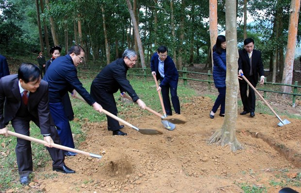 Tree-planting festival launched in Tuyen Quang province hinh anh 1