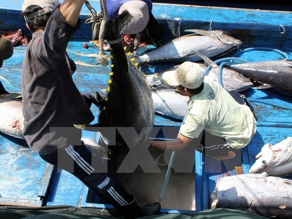 Tuna exports expand 10 percent in 2019 hinh anh 1