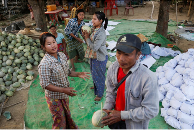 Myanmar's agricultural exports to China affected by nCoV outbreak hinh anh 1