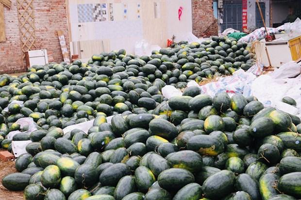 Qatari Embassy supports Vietnamese watermelon farmers hinh anh 1