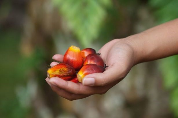 Indonesia exports over 36 million tonnes of palm oil in 2019 hinh anh 1
