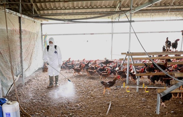Minister urges early detection of avian influenza outbreaks hinh anh 1
