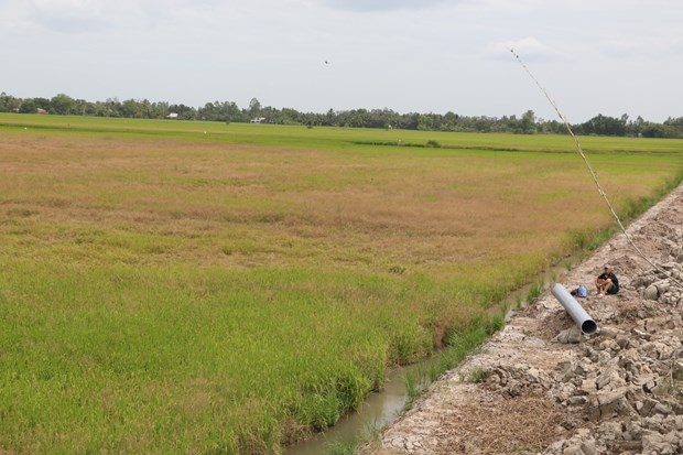 Drought, saltwater intrusion threatens farming, local life in Mekong Delta hinh anh 1