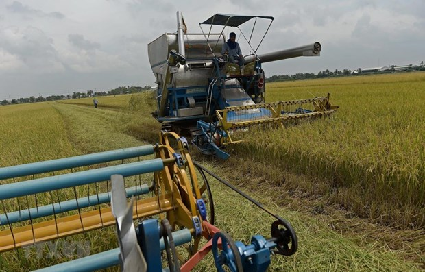 Thailand's rice export faces challenges in 2020 hinh anh 1