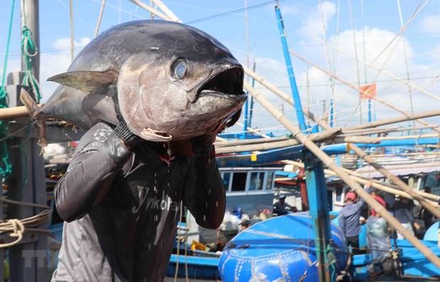 International cooperation key to promoting Vietnam's tuna brand hinh anh 1