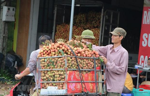Hai Duong prepares to export fresh lychees to Japan hinh anh 1