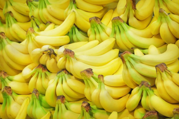 Philippine banana growers struggle due to COVID-19 hinh anh 1