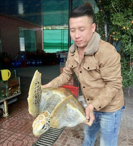 Nghe An man to set free 30kg sea turtle hinh anh 1