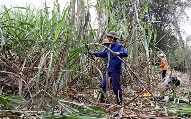 Development chances for sugar sector still ahead: PM hinh anh 1