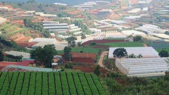 Lam Dong pilots building Vietnam's first green urban village hinh anh 1
