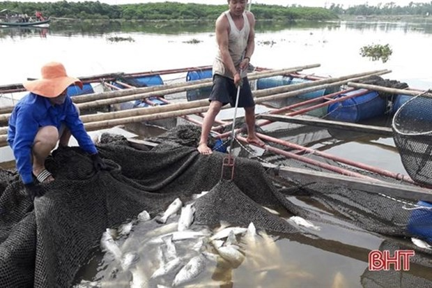 Ha Tinh's cage fish farmers restore production hinh anh 1