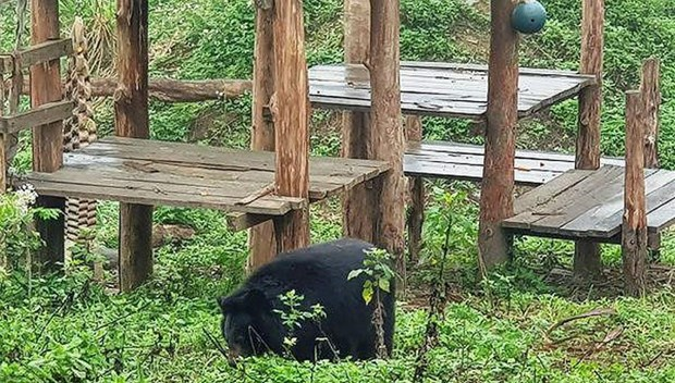 Ninh Binh bear sanctuary attractive to foreign tourists hinh anh 1