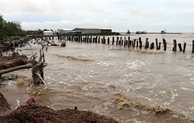 Mekong Delta grapples with erosion, subsidence hinh anh 1