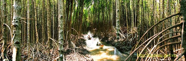 Forests in Ca Mau at high risk of fire hinh anh 1
