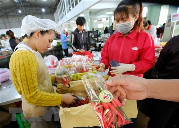 Diversifying markets – solution to boost fruit, vegetable exports hinh anh 1
