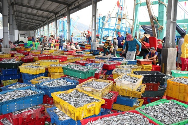 Conference talks ways to fight illegal, unreported, unregulated fishing hinh anh 1
