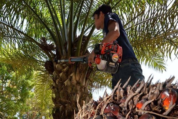 Malaysia, India aim to repair ties hinh anh 1