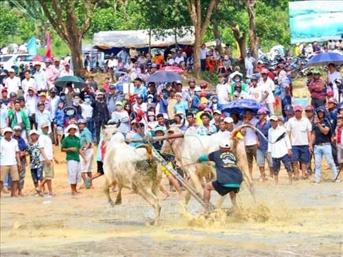 Ox racing festival in An Giang gears towards international status hinh anh 1