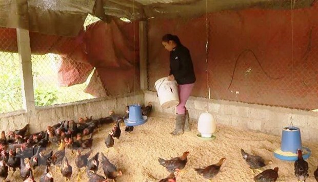 PM urges drastic solutions to control cattle, poultry diseases hinh anh 1
