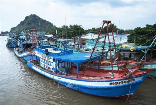 Kien Giang works to prevent illegal fishing activities hinh anh 1