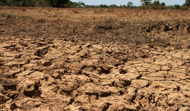 Drought hits agricultural production in Cambodia hinh anh 1