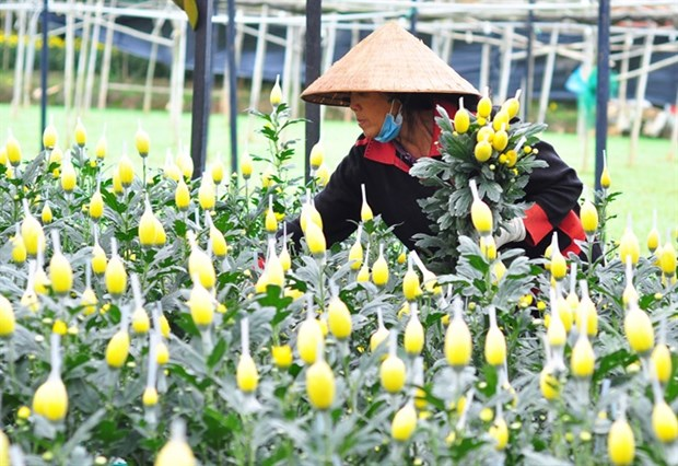 Lam Dong province sees sharp increase in flower export hinh anh 1