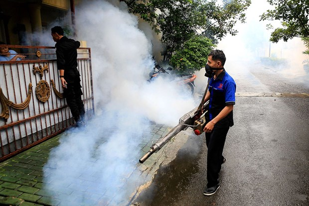 Indonesia grapples with dengue fever hinh anh 1
