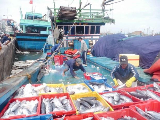 Khanh Hoa's tuna fishermen net high profits hinh anh 1
