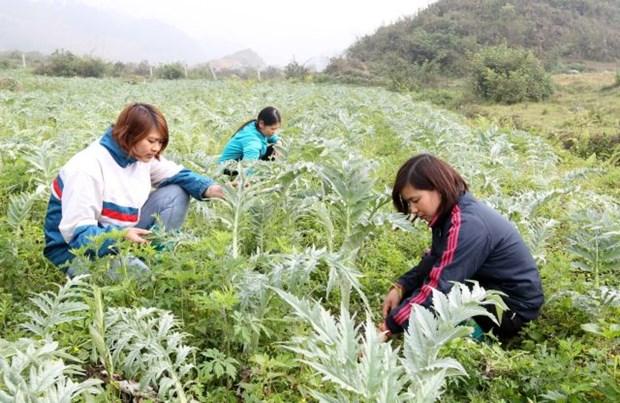 Lao Cai sets sights on boosting medicinal herb sector hinh anh 1