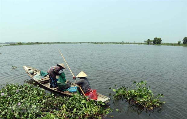 Thua Thien-Hue to build bird sanctuary in O Lau estuary area hinh anh 1
