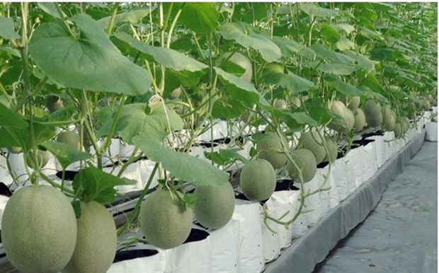 HCM City's agricultural production value up 4.3 percent in Q1 hinh anh 1