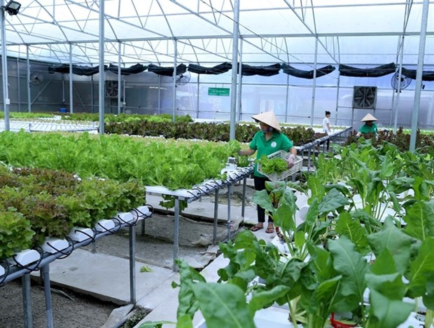 Can Tho moves to enhance efficiency of vital hi-tech urban agricultural models hinh anh 1