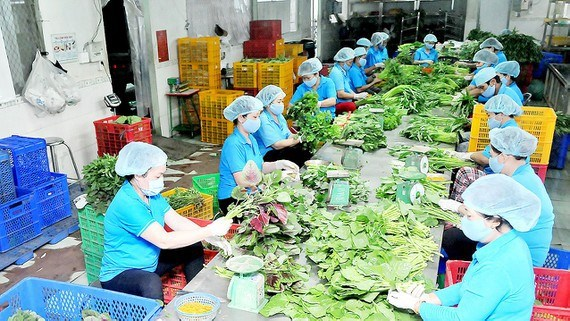 New 40 agricultural firms set up in HCM City in three months hinh anh 1