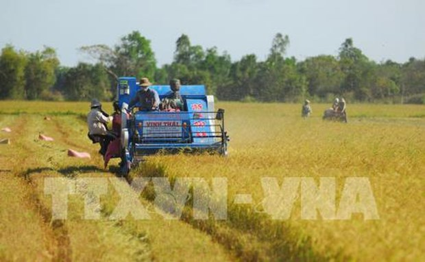 Ministry proposes postponing rice export suspension pending stocks review hinh anh 1